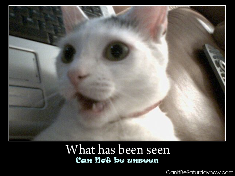 What has been seen cat