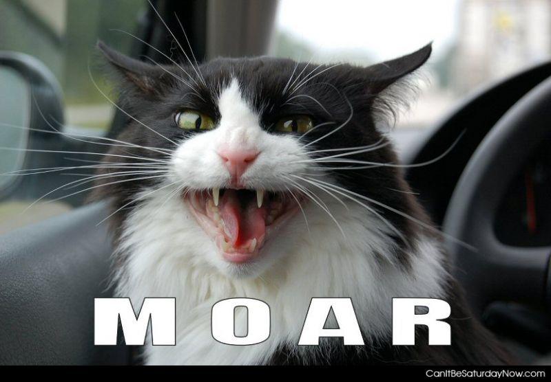 Moar cat