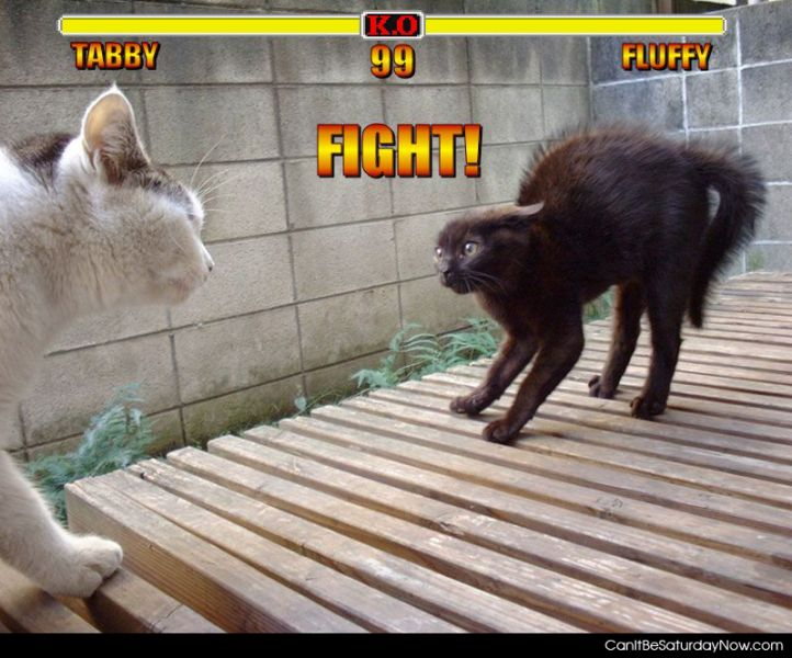 Tabby vs fluffy