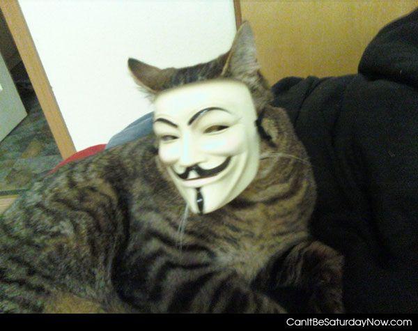 Anon kitty