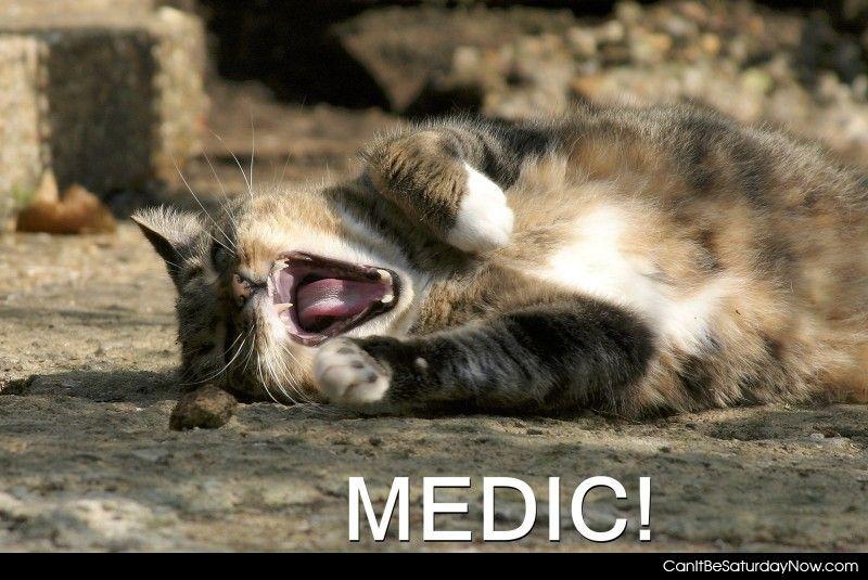 Cat want medic