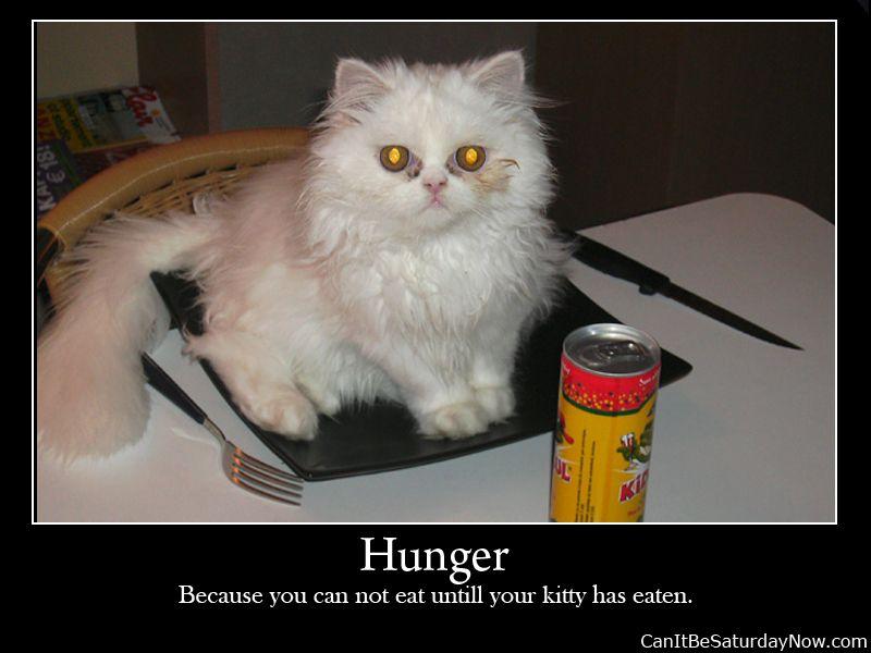 Kitty food