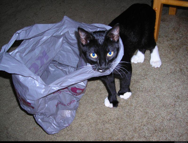 Super kitty bag