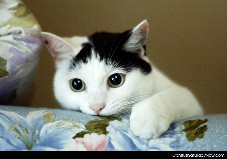 Kitty thinks