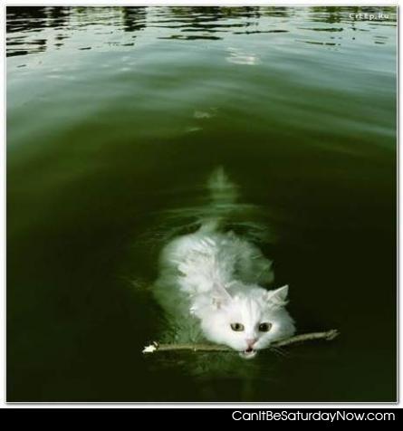 Kitty canfetch
