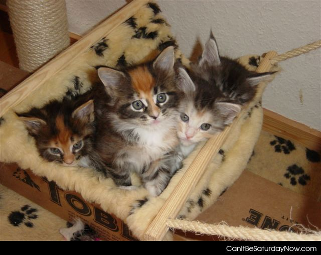 Kitty box