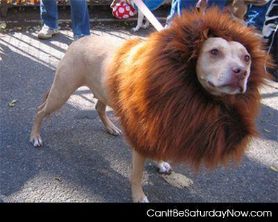 Lionbull
