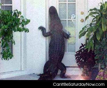 Croc door