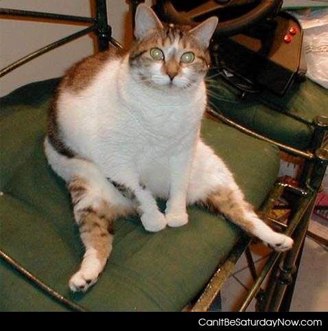 Fat cat stare
