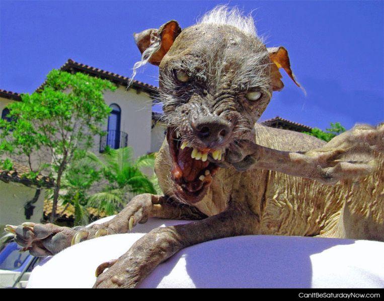 Ugly dog