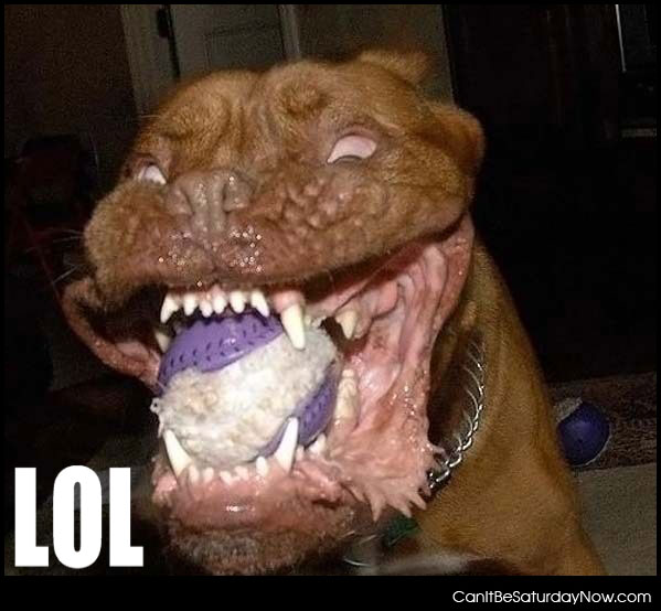 Most Scariest Dogs in the World