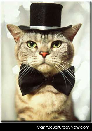 top hat cat. Top hat cat