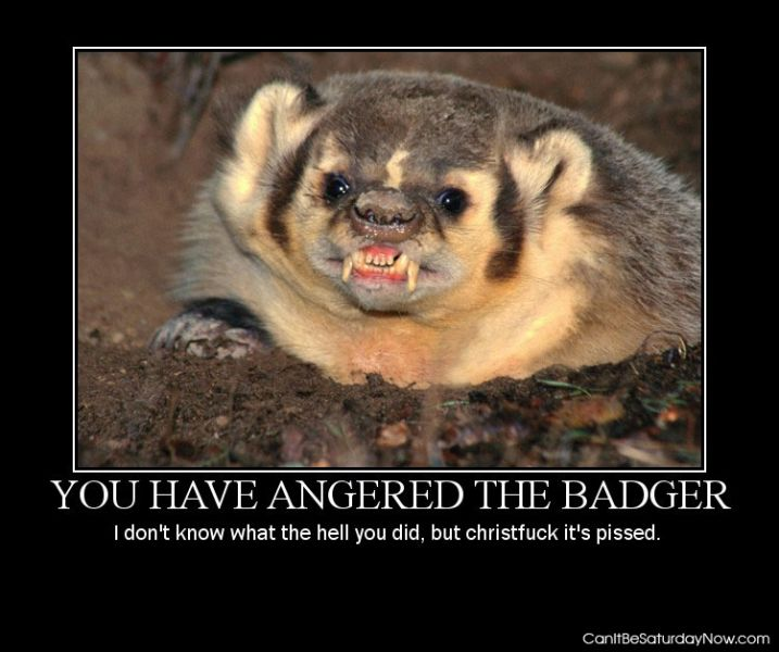 Angered badger