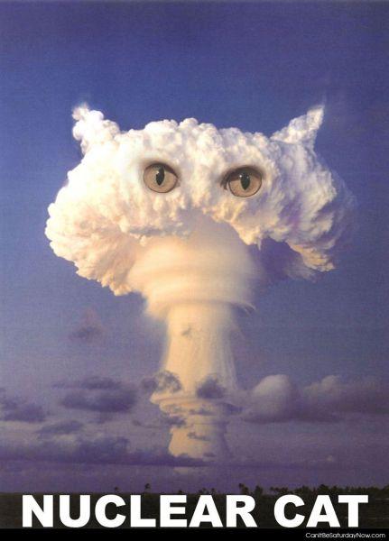 Nuclear cat
