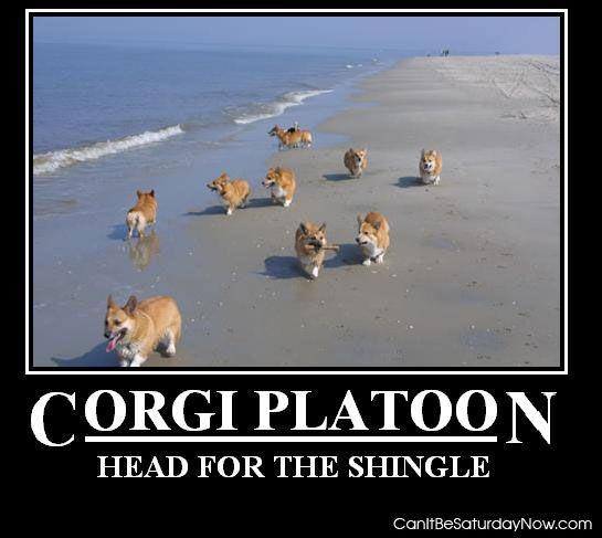 Corgi platoon