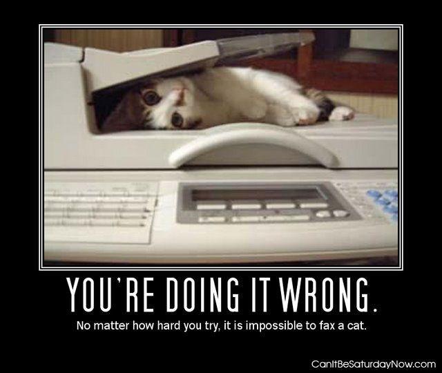 Fax a cat
