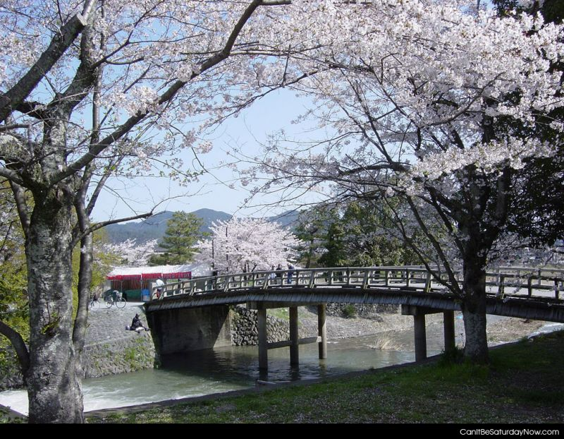 White flower bridge