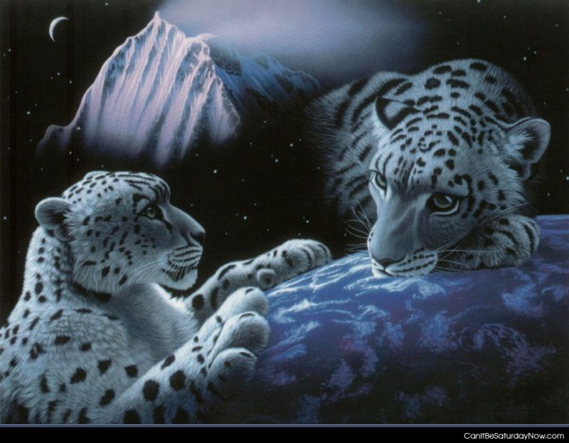 White tiger space