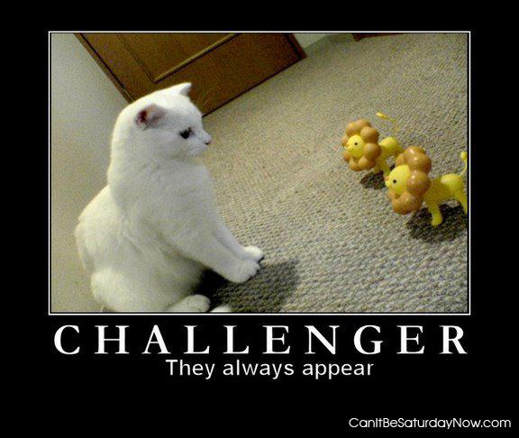 Kitt vs cat