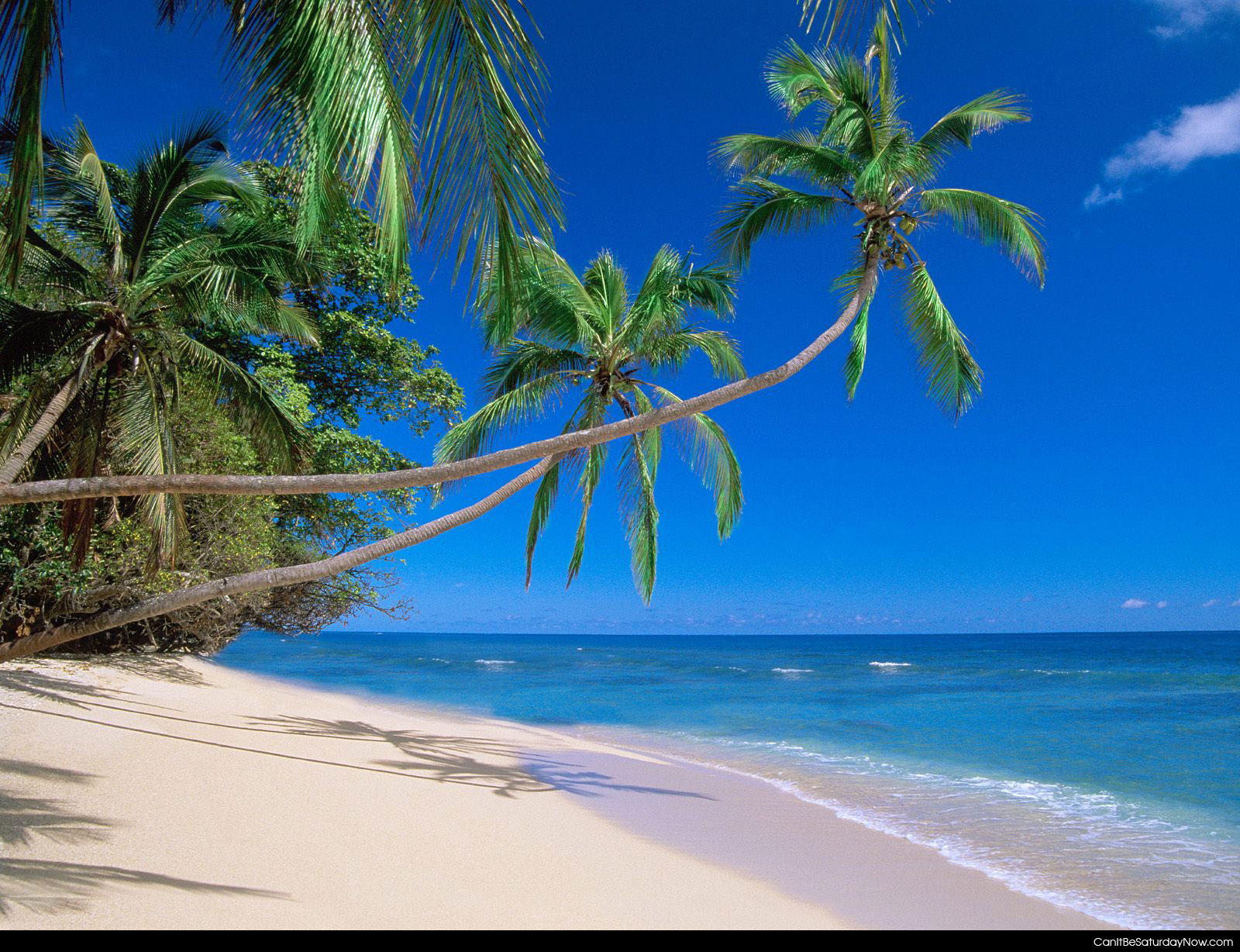 can it be saturday now com palm tree beach