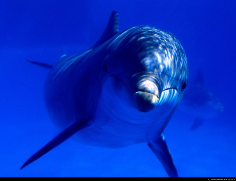 Dolphin hello