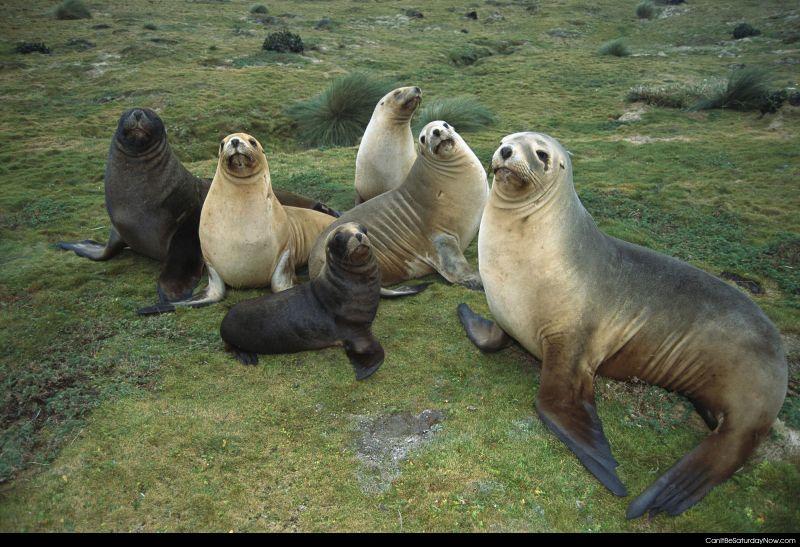 Warm seals