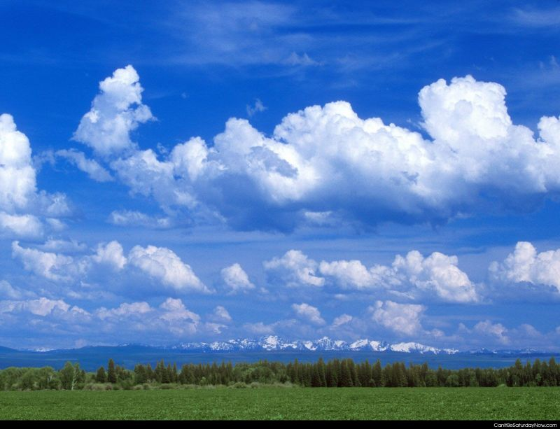 Open air pasture