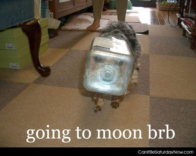 Dog to moon