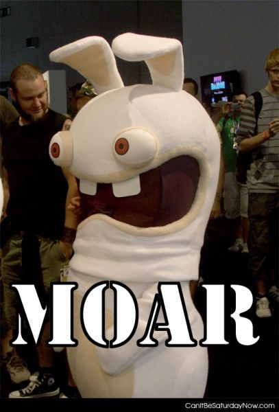 Moar bunny