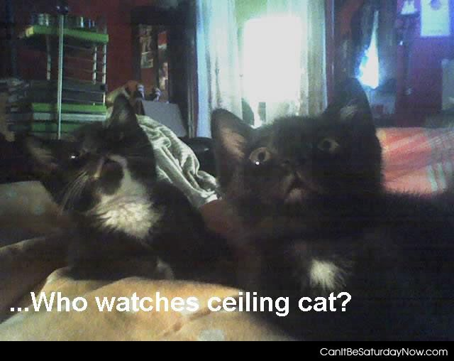 Watch ceiling cat