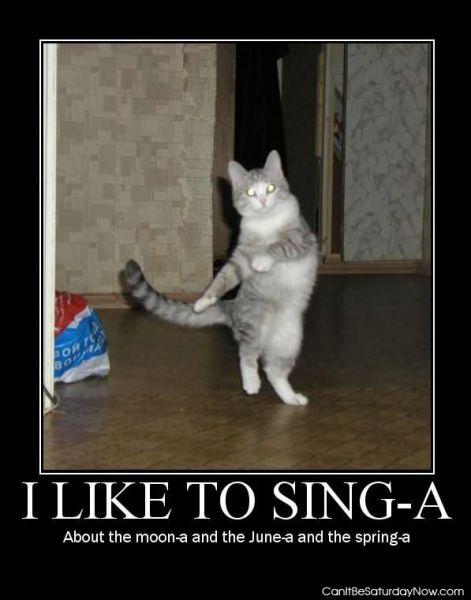 Dance cat