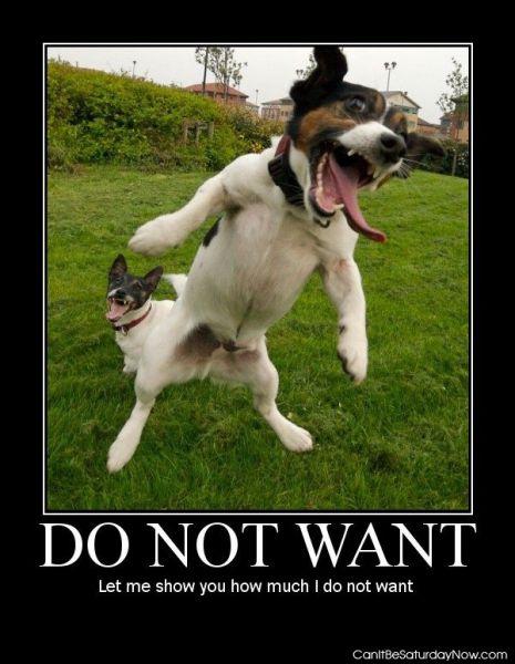 Dog no want
