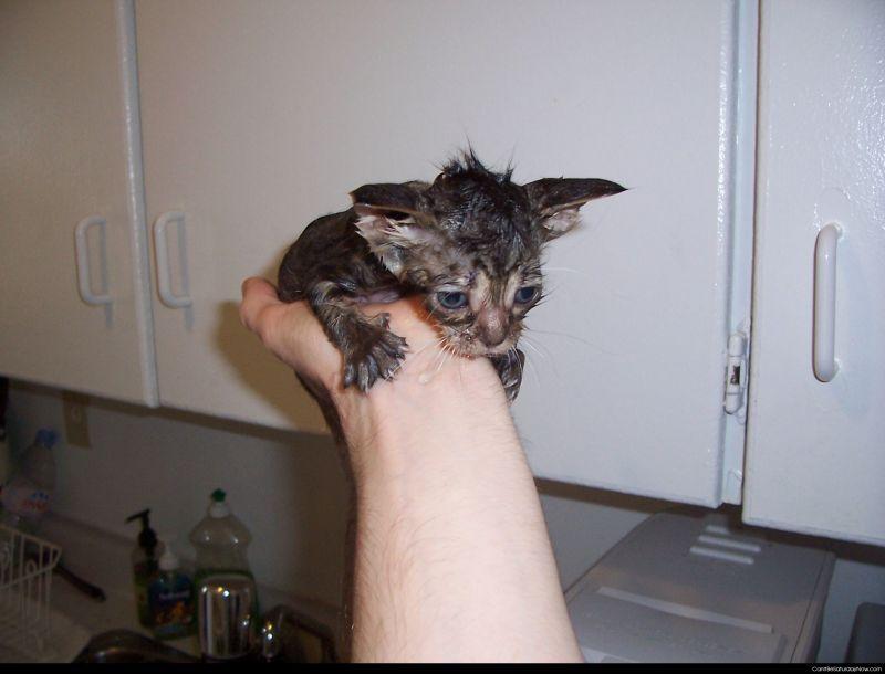 Wet kitty
