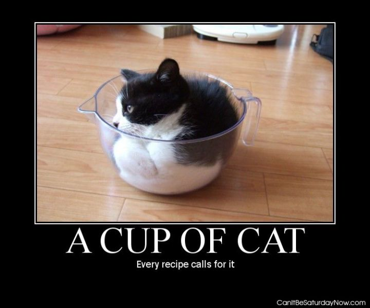 Cup of cat