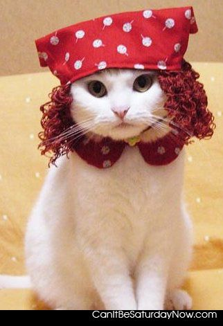 Raggedy ann kitty