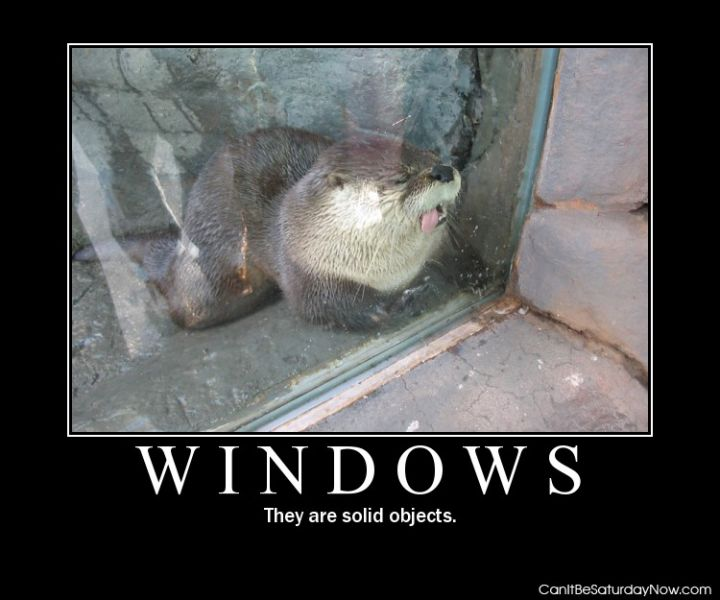 Windows are solid