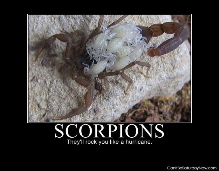 Scorpion mom