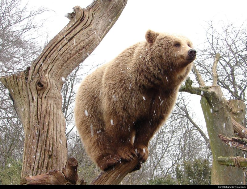 Post bear