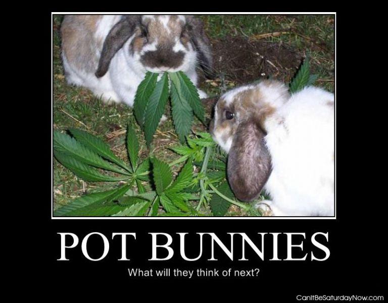 Pot bunnies