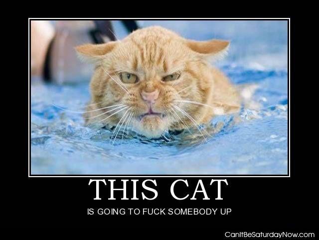 Mad cat 2