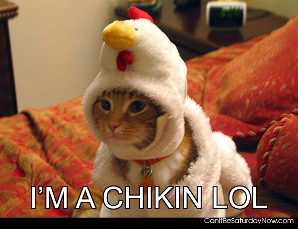 Chicken kitty