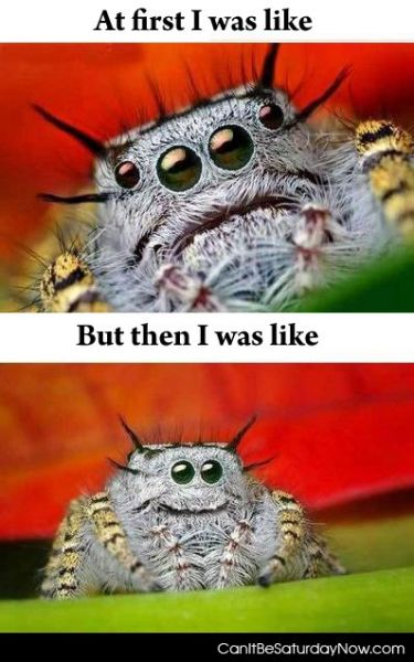 Happy spider 2