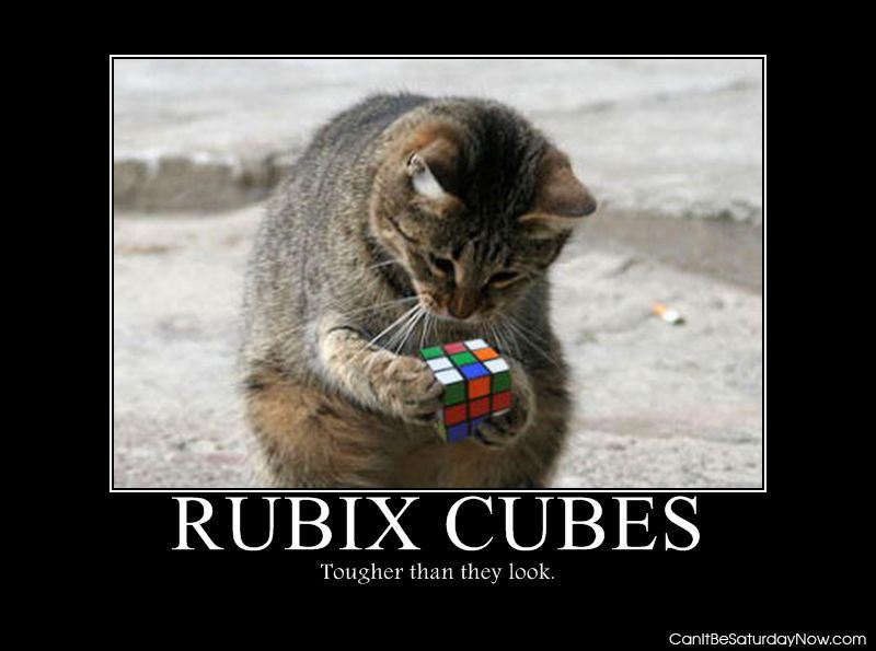 Cat rubix