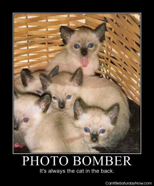 Photo bomber 2