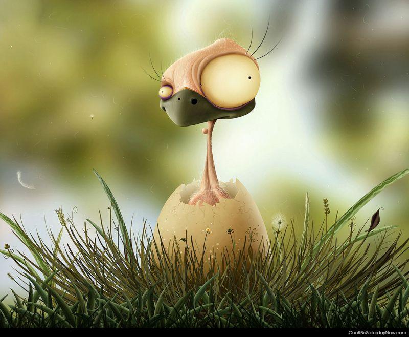 Odd chicken