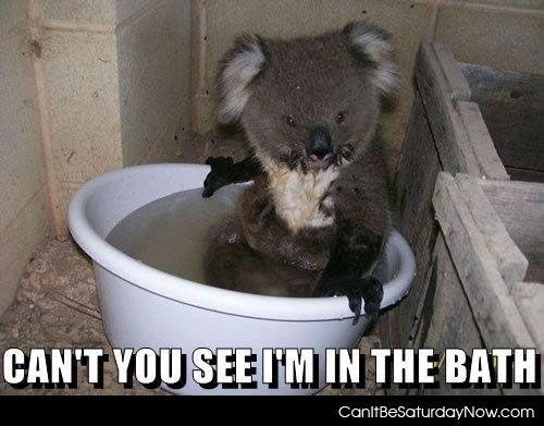 Koala bath