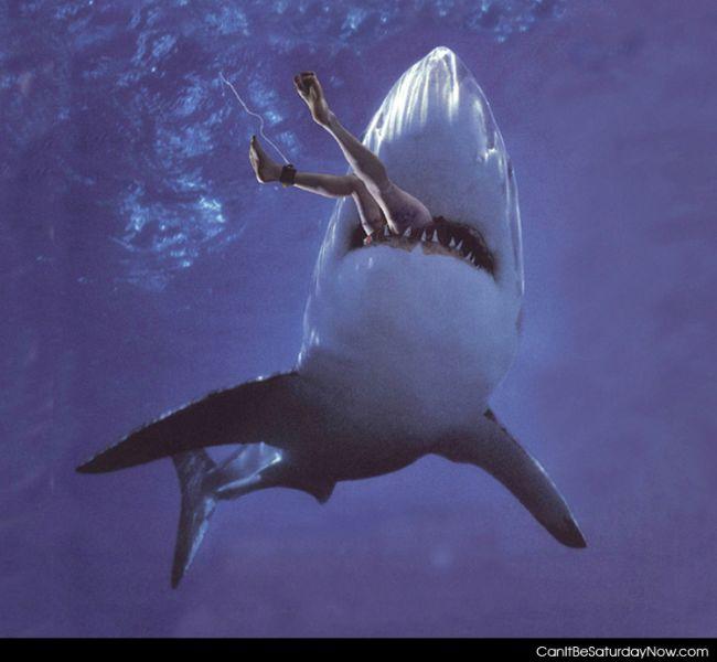 Shark nom noms