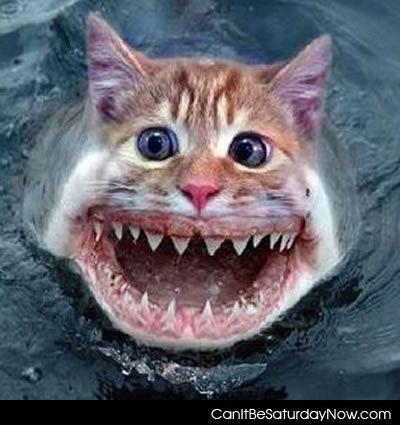 Kitty shark