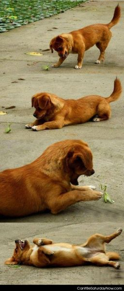 Dog vs mantis