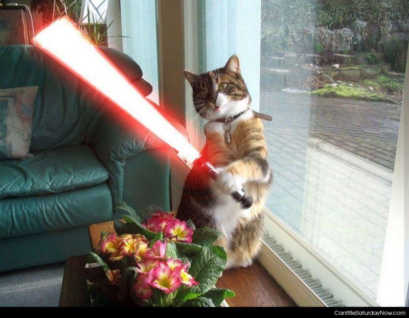 Cat saber